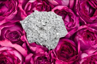 Piaget rose day